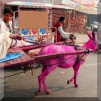 ΡΟΖ ΤΑΞΙ ΣΤΟ ΠΑΚΙΣΤΑΝ, ΜΟΝΟ ΓΙΑ ΓΥΝΑΙΚΕΣ Έτσι ο πιτσιρικάς έβαψε ροζ το γαϊδουράκι του μπας και πάρει κούρσα!